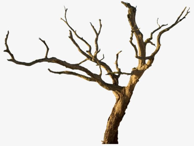 Withered Trunks And Branches PNG, Clipart, Branches.