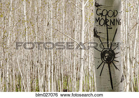 Stock Images of Good morning carved in Aspen tree trunk blm027076.