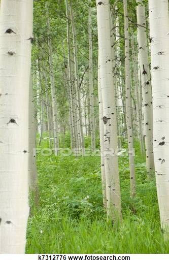 17 Best images about tree trunks on Pinterest.