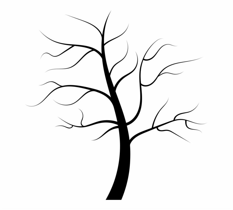 Tree Root Trunk Juglans Evergreen.