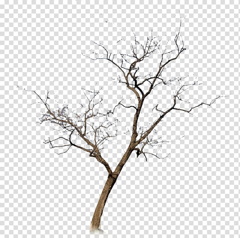Dry brown tree, Withered,No leaf transparent background PNG.