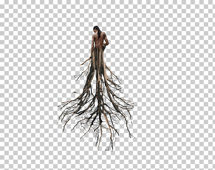 Root Tree Trunk Populus nigra, tree PNG clipart.
