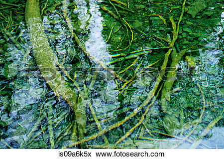 Picture of Tree branches underwater is09a6k5x.