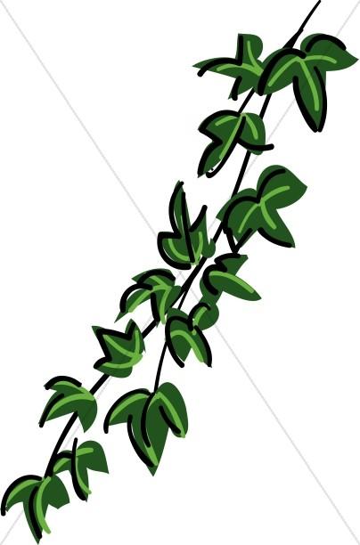 Vine Tree Clipart.