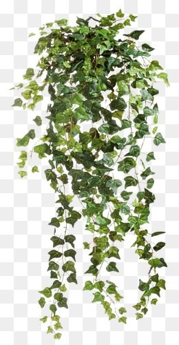 Vines Clipart Images, 574 PNG Format Clip Art For Free.