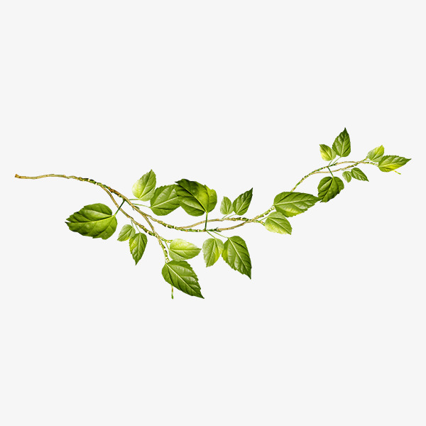 Vine And Branches PNG Transparent Vine And Branches.PNG.