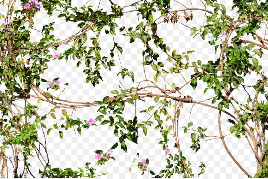 Flower Vine png download.