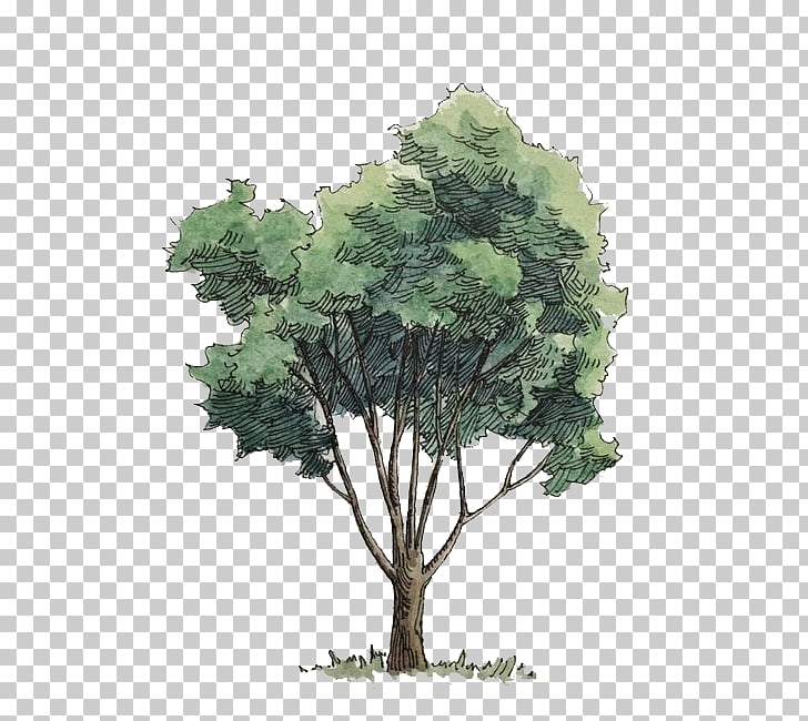 Watercolor painting Tree, Watercolor trees, green leafed.