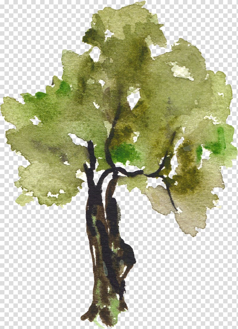 Green plant watercolor painting illustration, Tree.