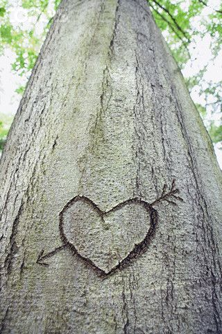 heart carved into tree.