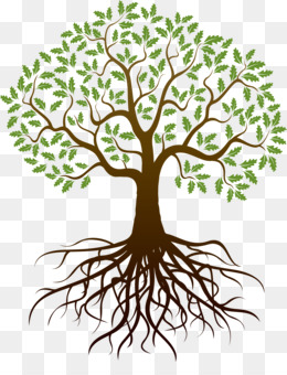 Tree Root PNG.