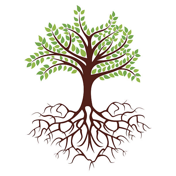 tree with long roots clipart clipground