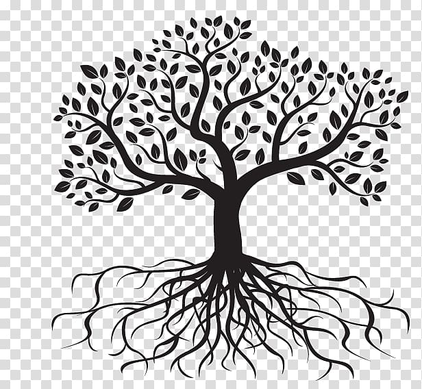 Black tree , Root Drawing Tree , root transparent background.
