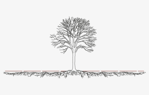 Free Tree Roots Clip Art with No Background.