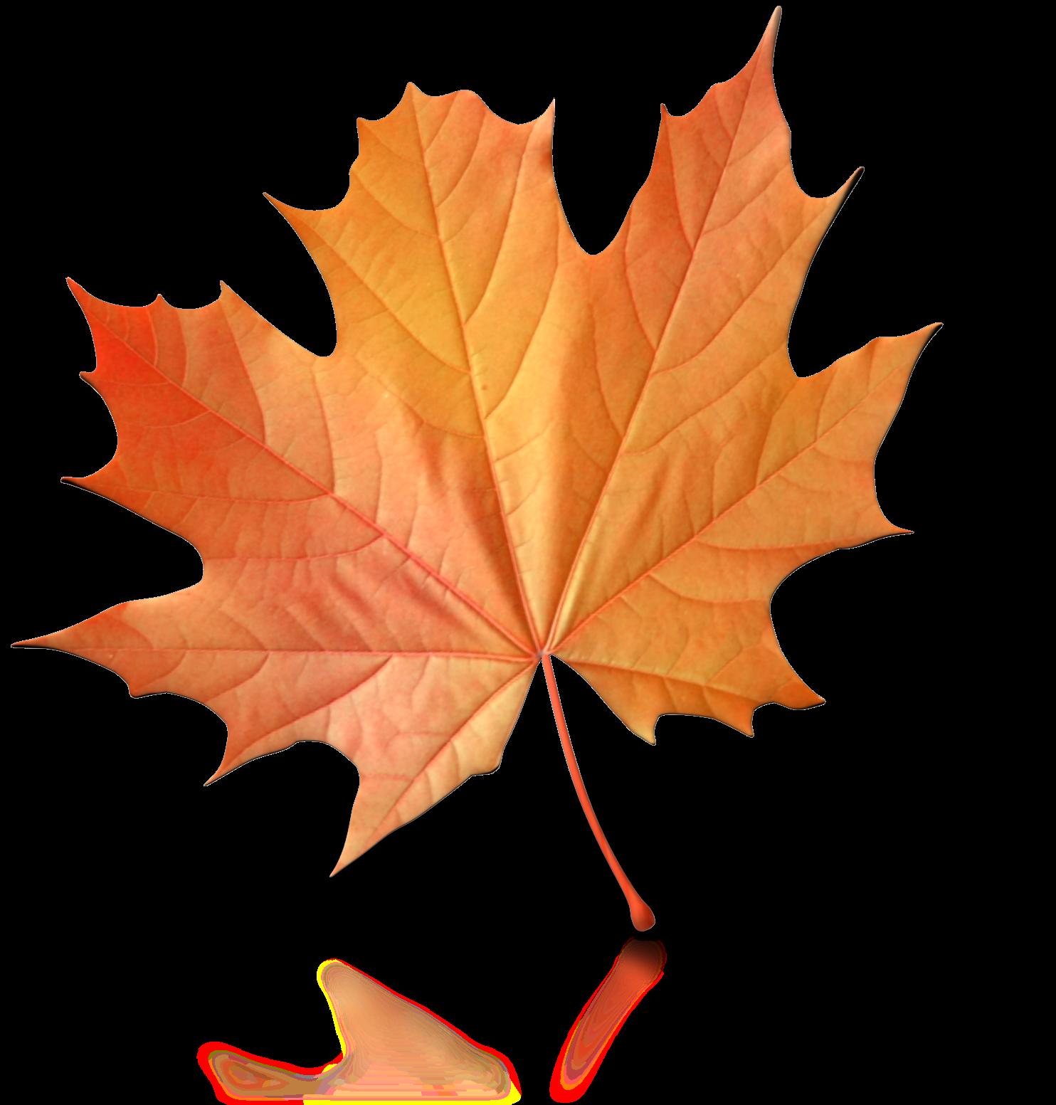 One Fall Leaf Png Clip Art.