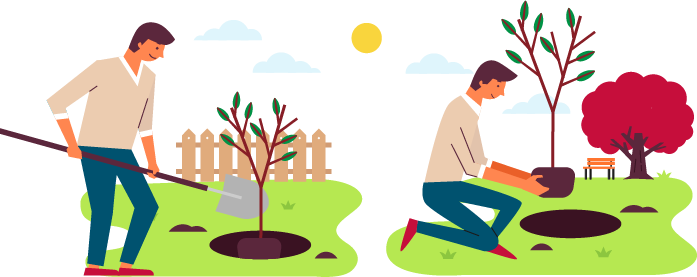 Guide to Planting a Tree.