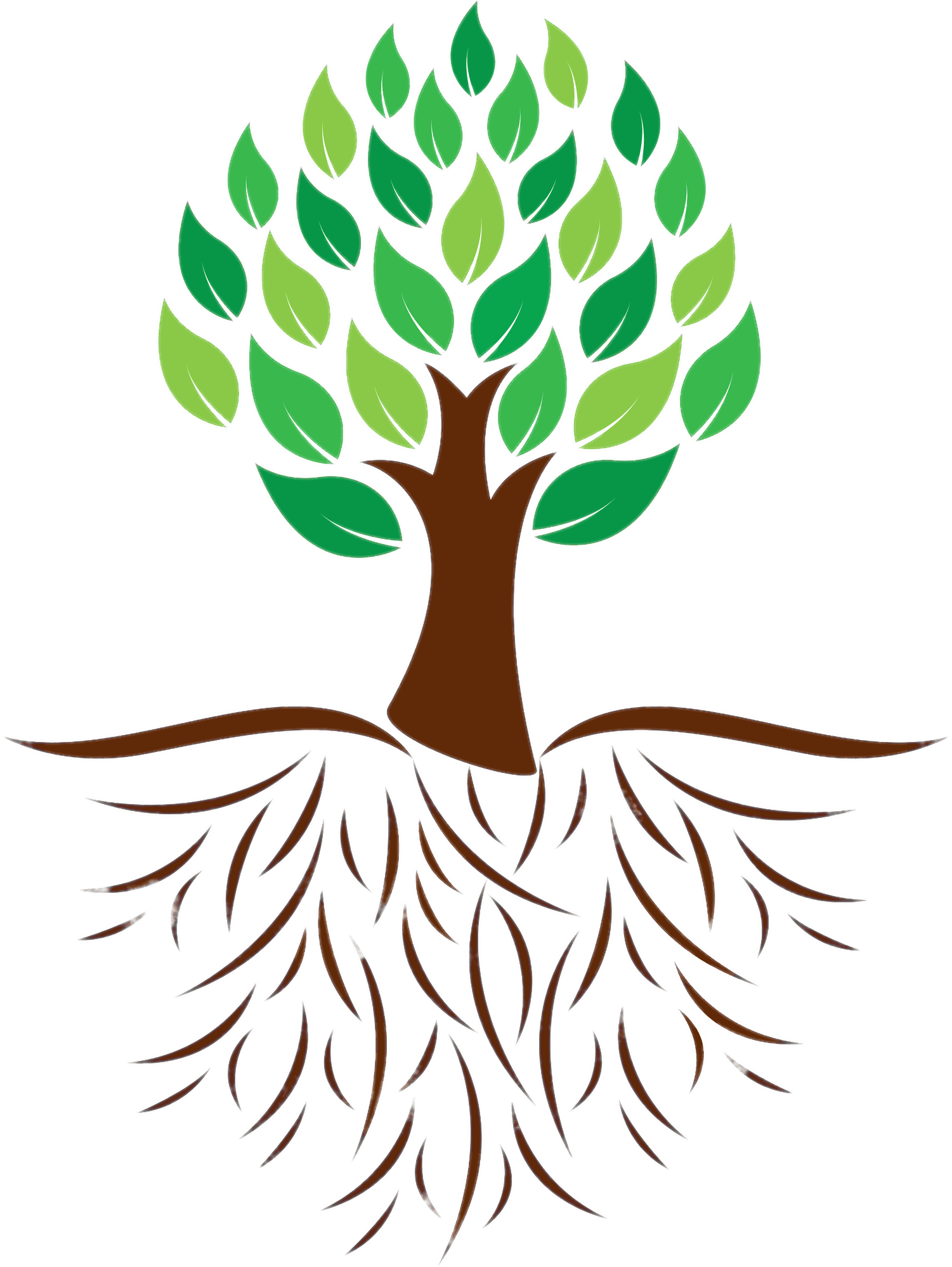 Tree and Roots Colour Illustration transparent PNG.