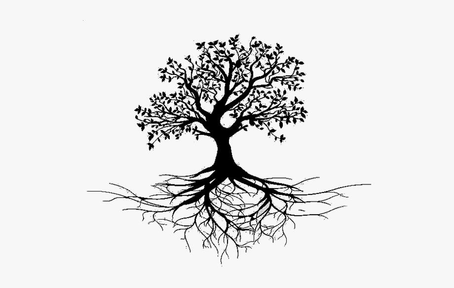 Bird Tree Root Stock Photography.