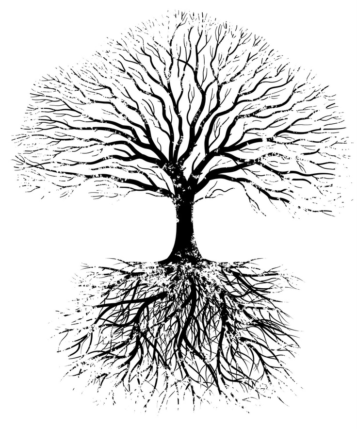 tree with roots clipart outline