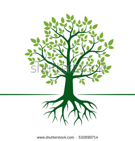 Plant Roots Stock Images, Royalty.