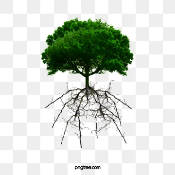 Tree Roots PNG Images.