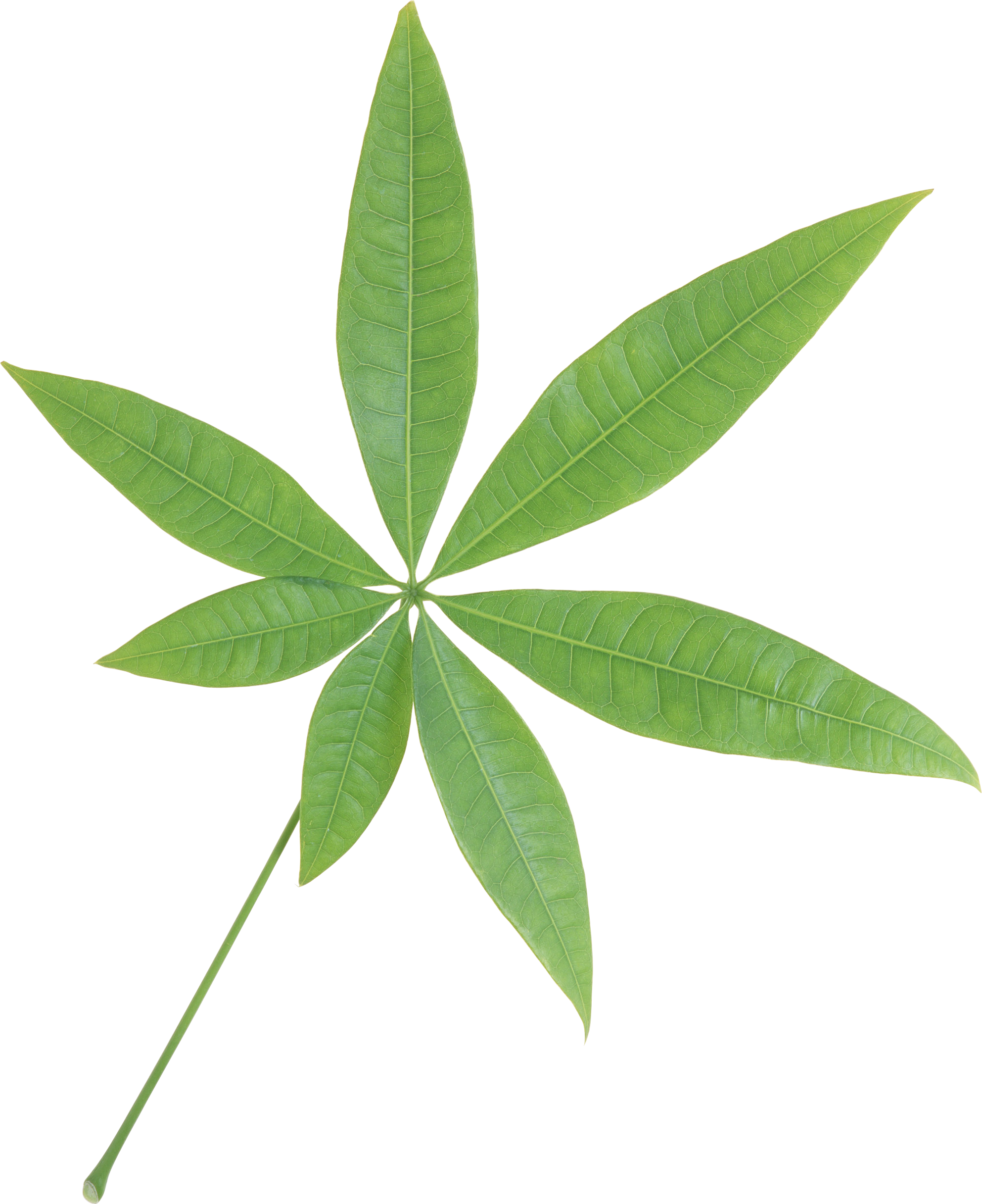 Green leaves PNG Image.