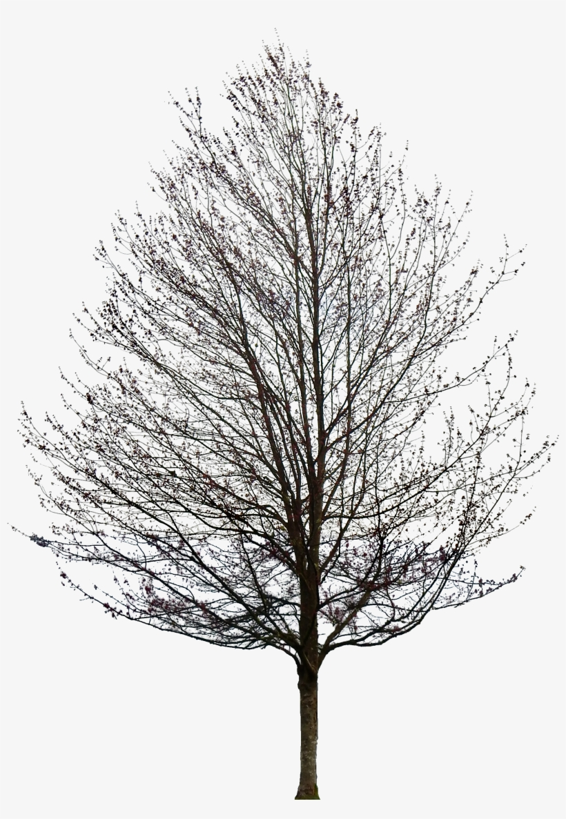 Tree Without Leaves Png Transparent PNG.