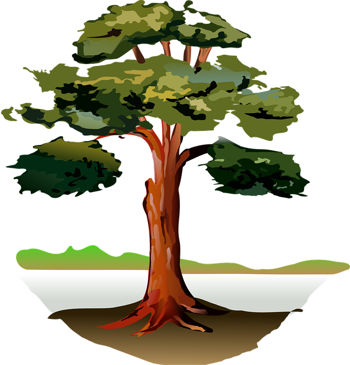 Free vector graphic: Tree, Wood, Forest, Oak, Nature.