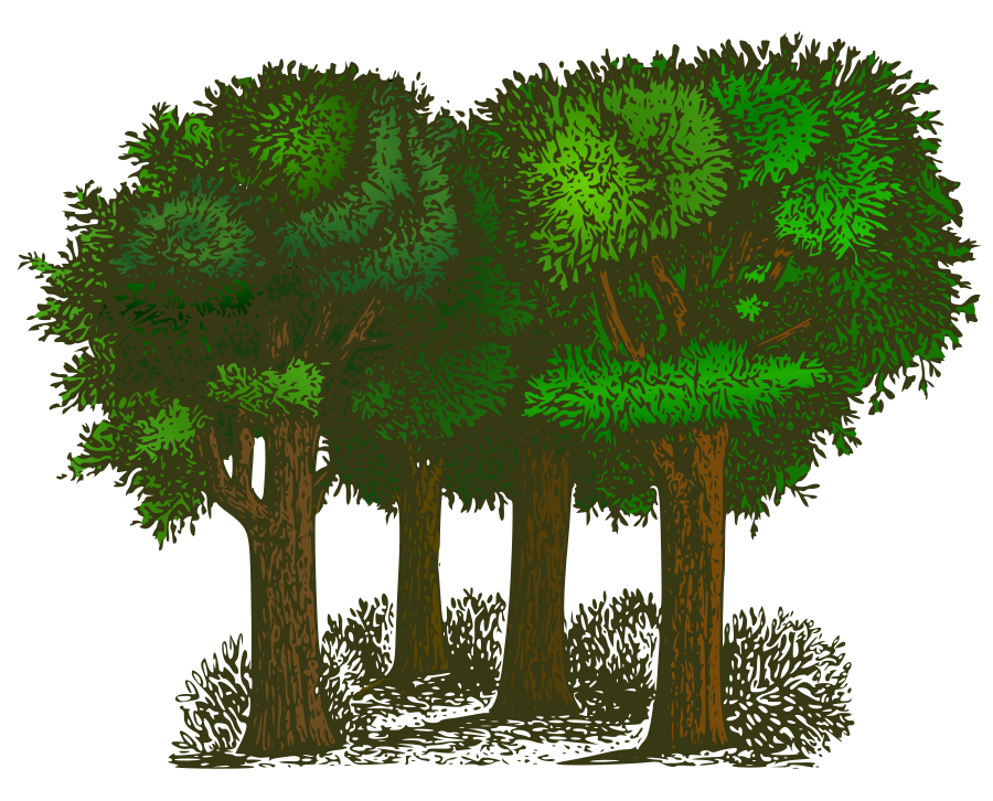 Green tall trees clipart - Clipground
