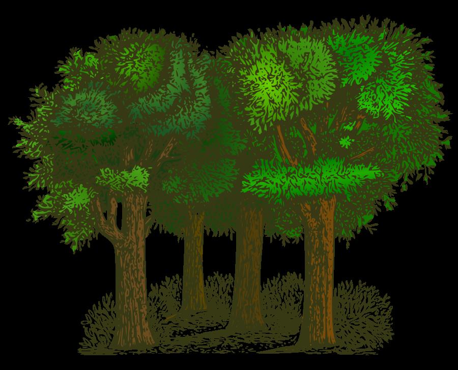 Clip Art Trees & Clip Art Trees Clip Art Images.