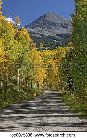 Stock Images of Autumn leaves on trees along road, Sawpit.