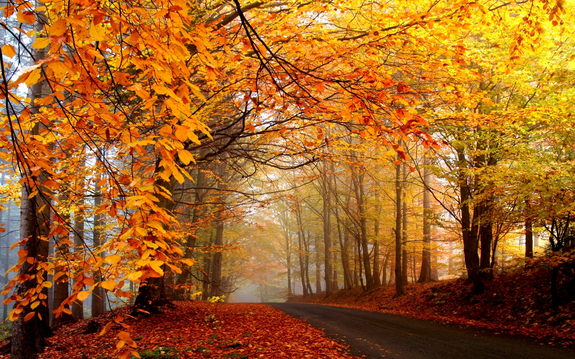 Autumn road clipart.