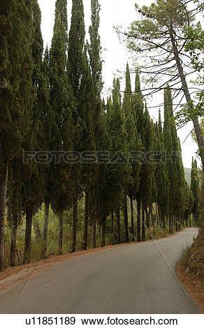 Stock Photograph of Trees Along Road u11851189.