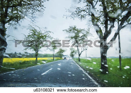 Stock Photography of Trees along road in rain, Brandenburg.