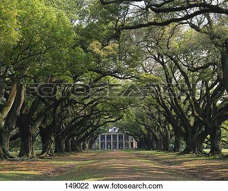 Stock Photo of Trees along dirt road leading towards country house.
