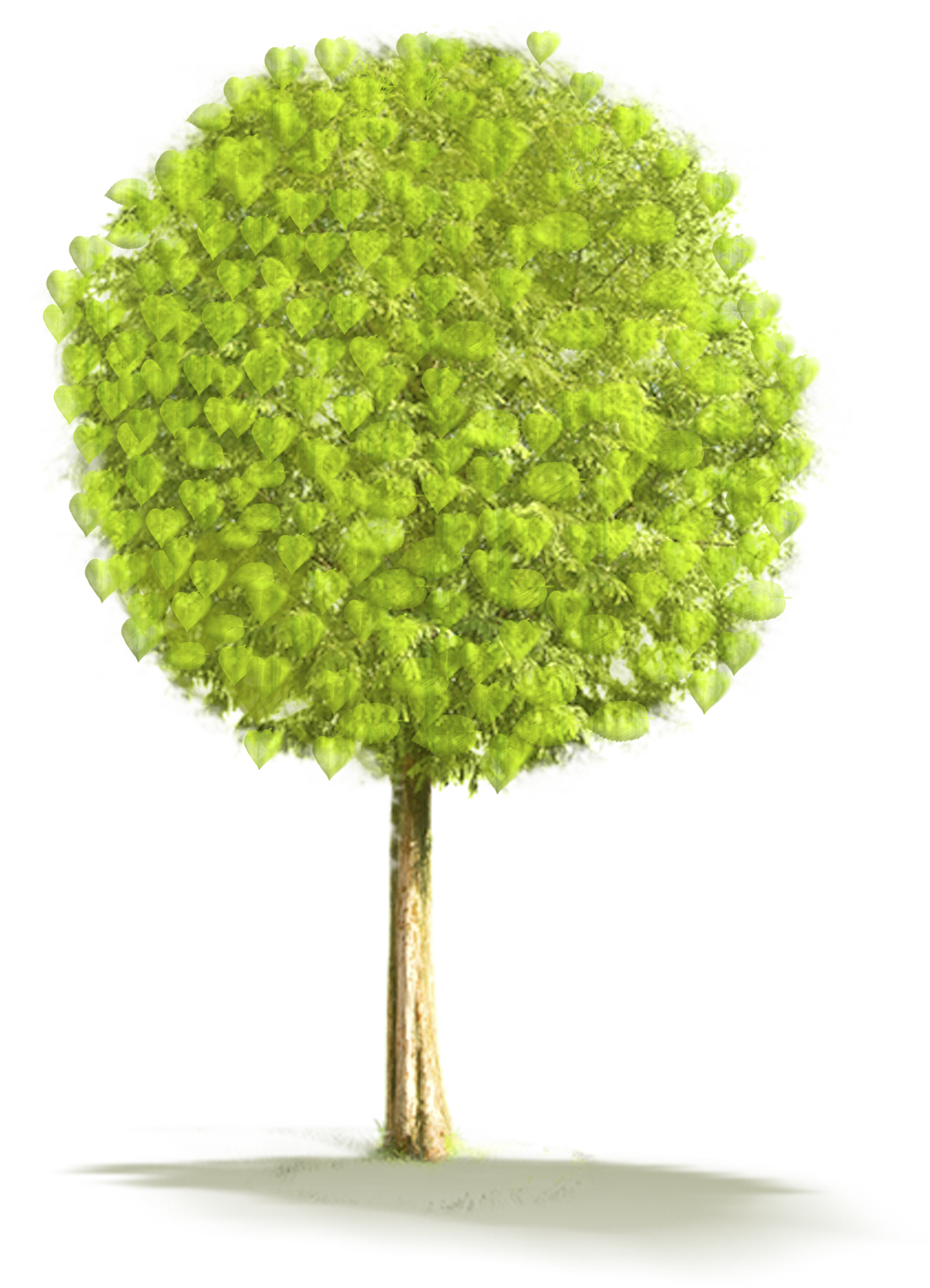 Large Tree PNG Clipart.