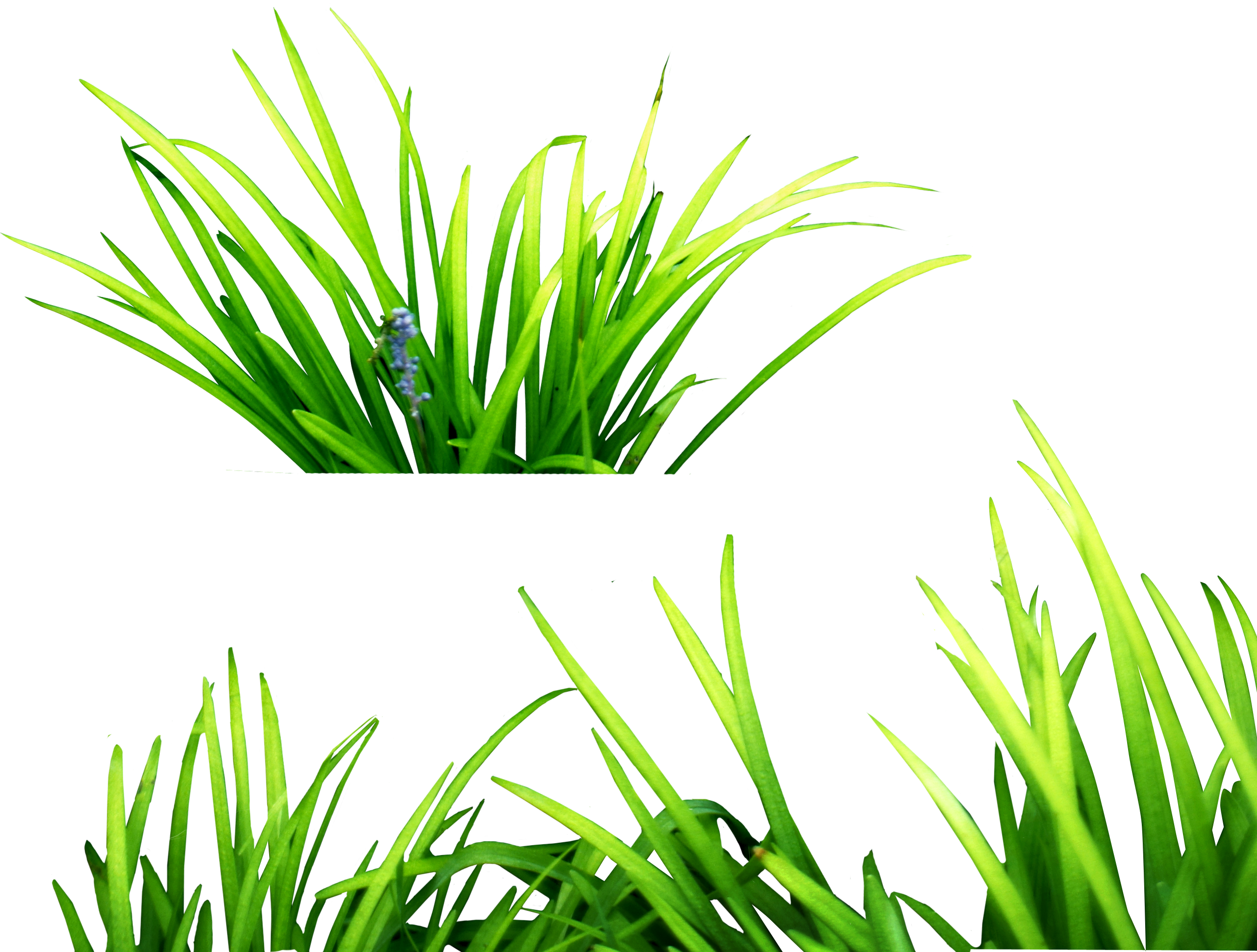 Grass PNG Images, Pictures #197749.