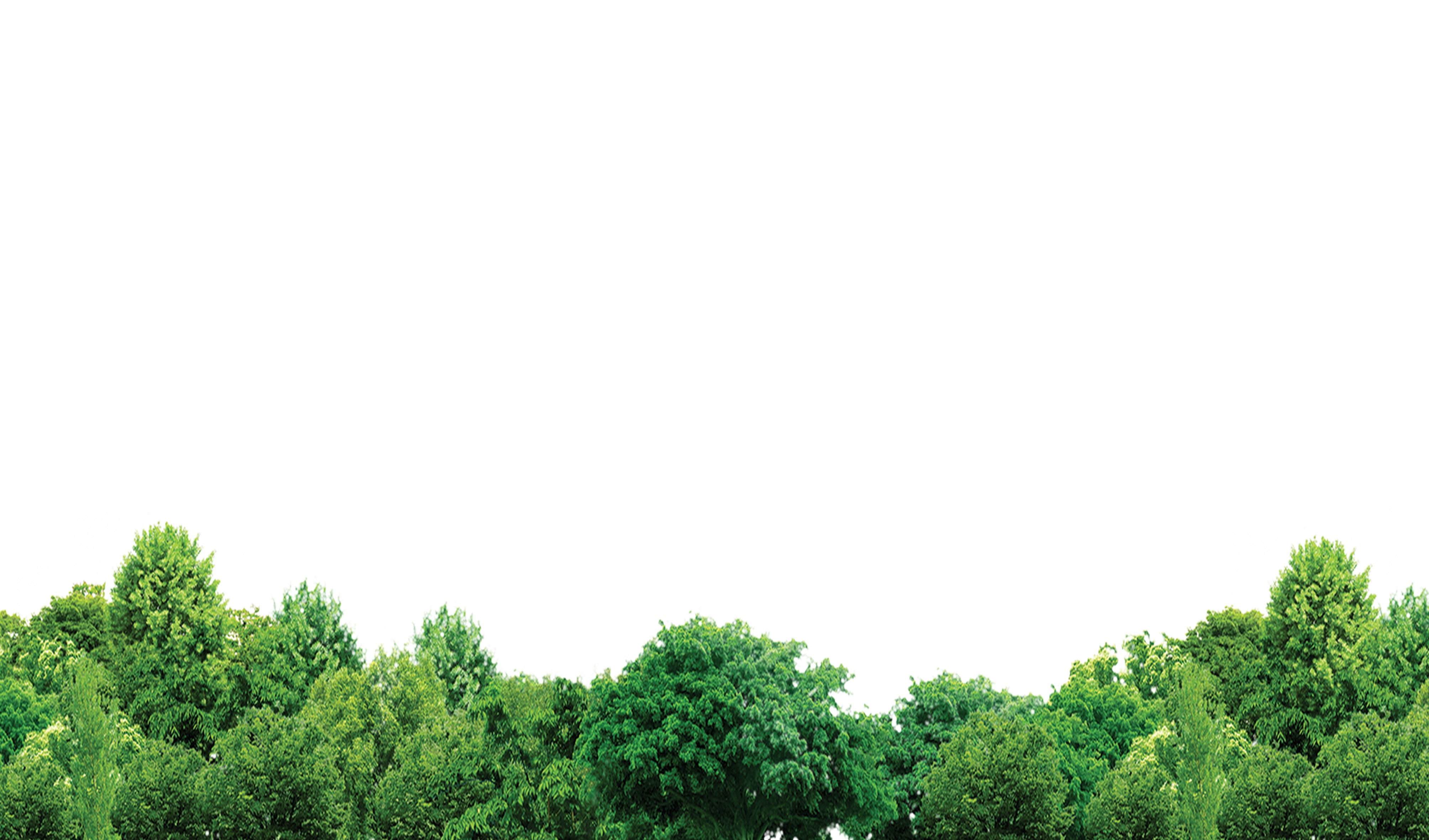 Download Tree Forest Trees Free HD Image Clipart PNG Free.