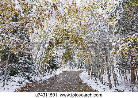 Stock Photography of A path through the woods with trees arching.