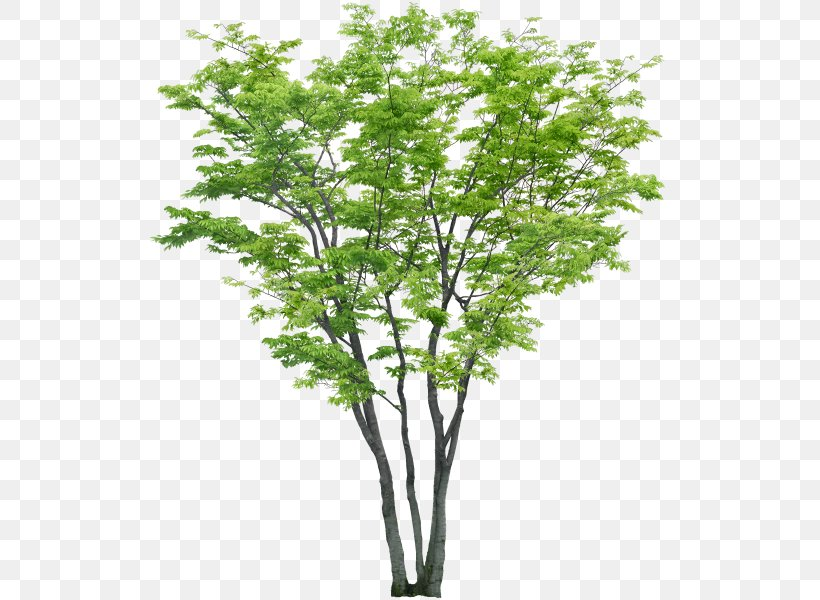 Tree Psd Adobe Photoshop File Format, PNG, 540x600px, Tree.