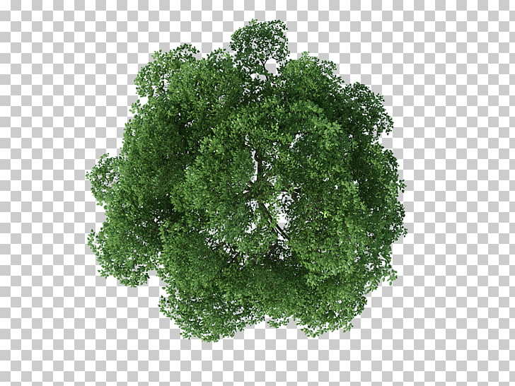 Tree Rendering, tree top view, photo of brown and green tree.