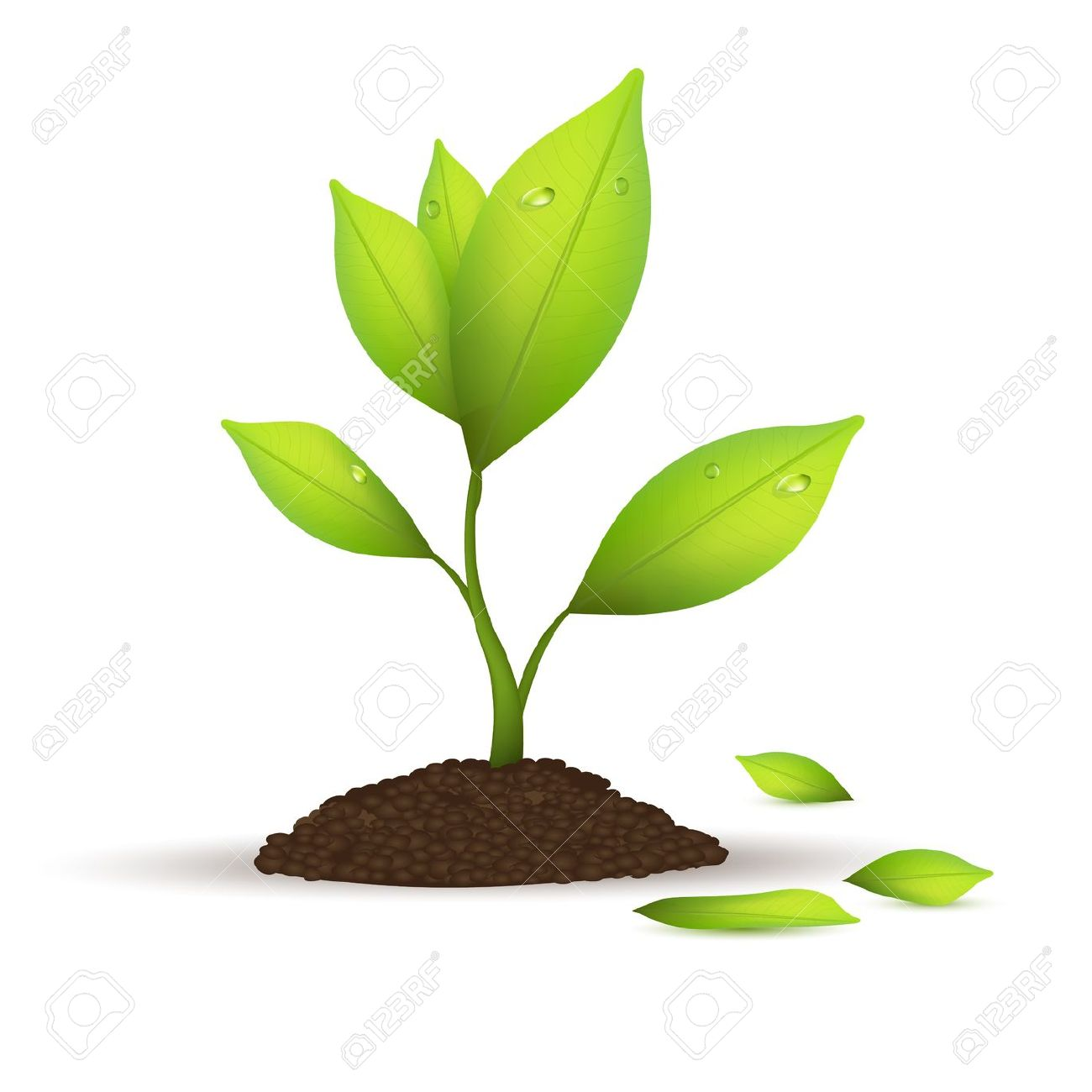 Free Leaf Growing Cliparts, Download Free Clip Art, Free.