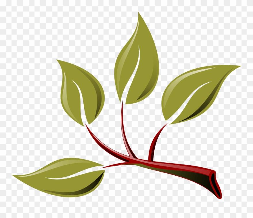 Branch Leaf Tree Twig Plant.