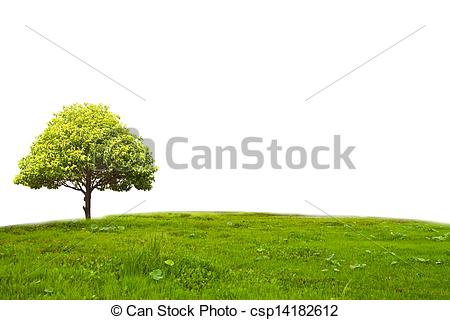 Stock Photography of Bullet Wood Headland tree.