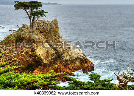 Stock Photo of Lone Cypress Tree k40369062.