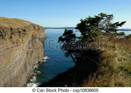 Stock Photography of Tree overlooking Bell Island Cliffs.