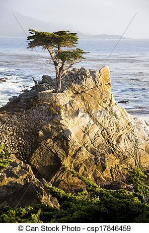 Stock Images of Lone Cypress Tree.