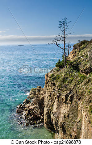 Picture of Lone tree on a headland overlooking the ocean.
