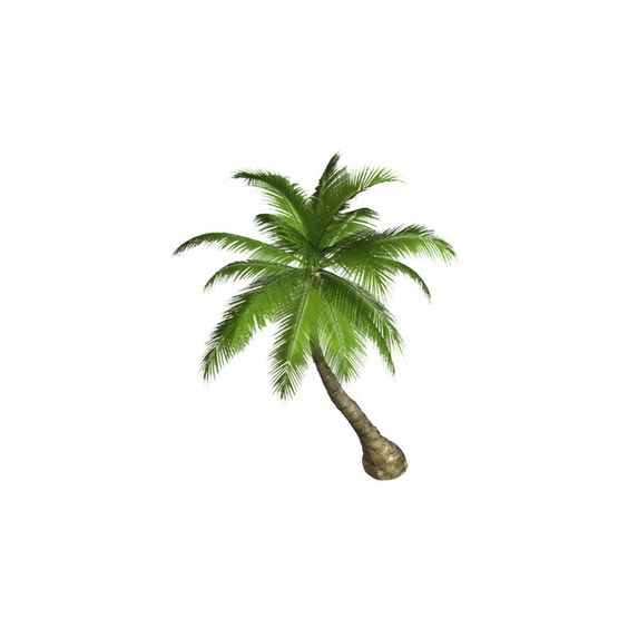 Free High Resolution graphics and clip art palm tree png ❤ liked.