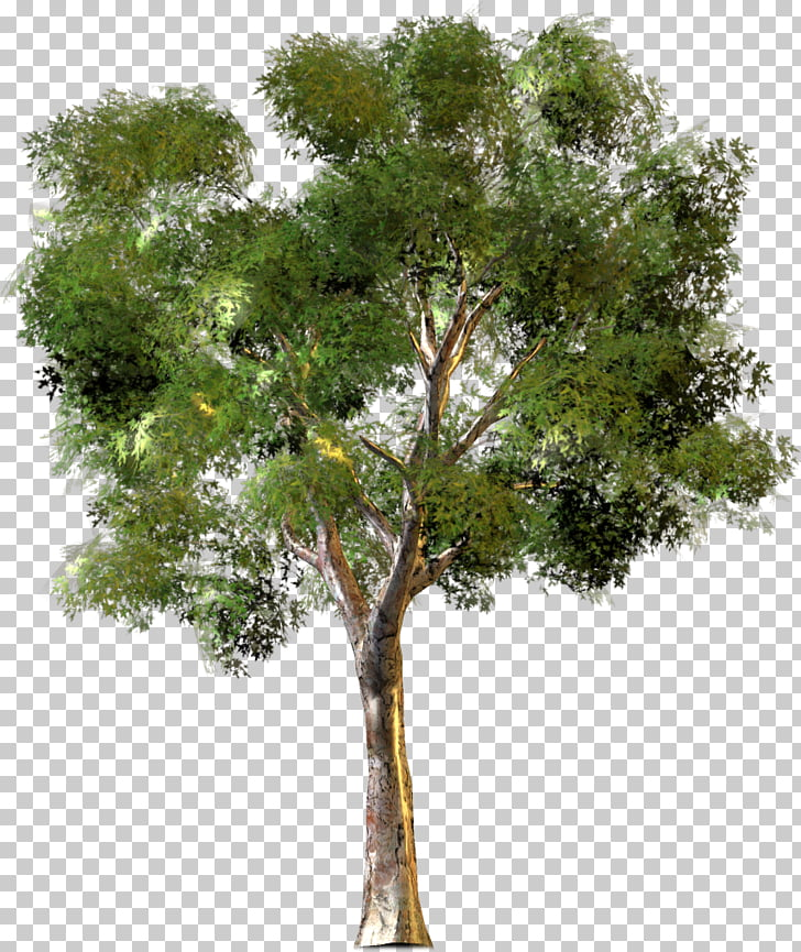 0 Tree New York City Housing Authority Forest, Arbre PNG.